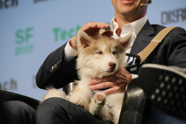 Dog-sitting startup Rover just raised $155M