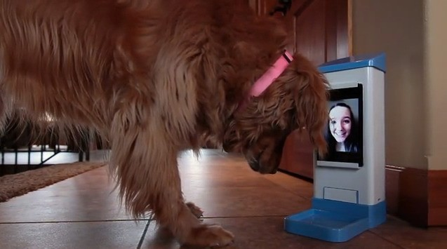 iCPooch Is A Remote Treat Dispenser & Pet Facetime Terminal For Absent Dog Owners