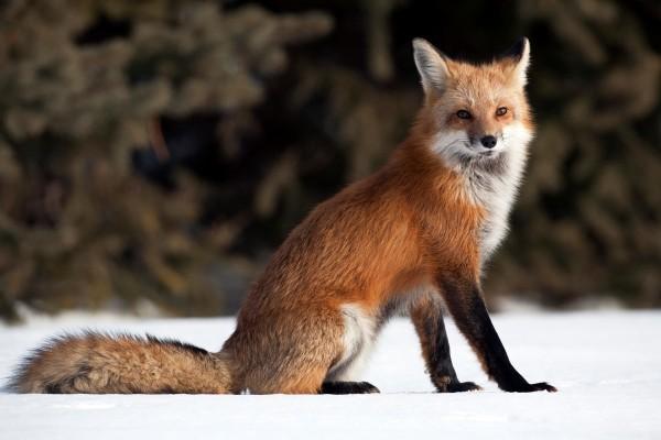 Multi-process Firefox brings 400-700% improvement in responsiveness