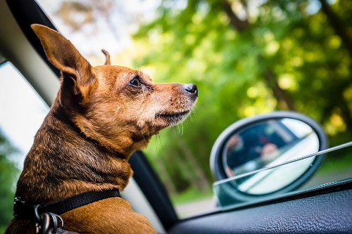 Uber's newest feature alerts drivers that pets will be joining the ride