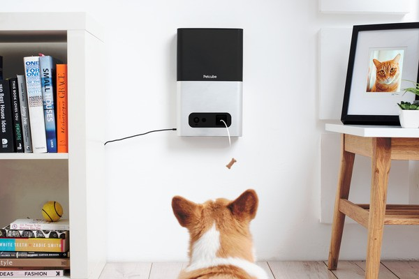 Petcube Bites treat camera lets you monitor and reward your pet from afar