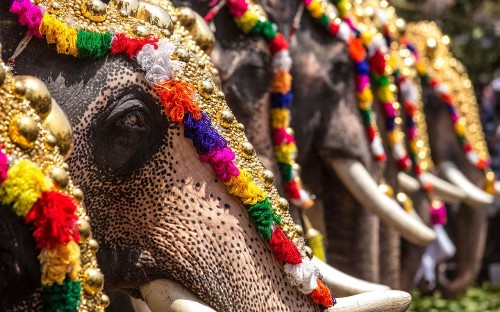 New documentary exposes brutal treatment of India's temple elephants