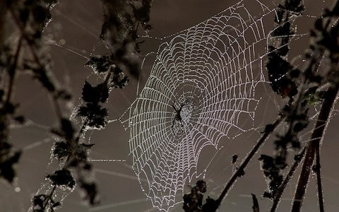 Honest John: how can I stop spider webs forming on my car?
