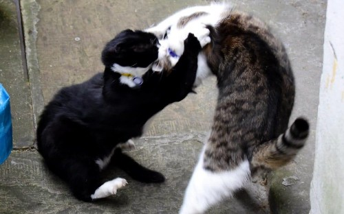 Number 10 cat Larry loses collar in 'most brutal fight yet' with Foreign Office's Palmerston