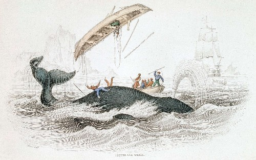 How to catch a whale, according to Arthur Conan Doyle
