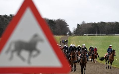 New flu case forces British Horseracing Authority to close 54 more yards