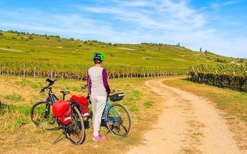 The five best destinations for wine cycling tours in France