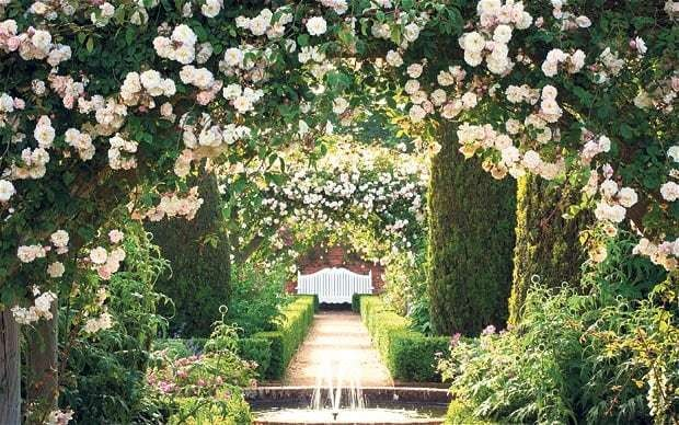 Heaven-scent: the best roses for your garden