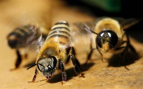 Plant winter flowers to help bees survive till spring, Government urges