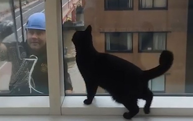 Funny video shows cat chasing window cleaner on other side of glass