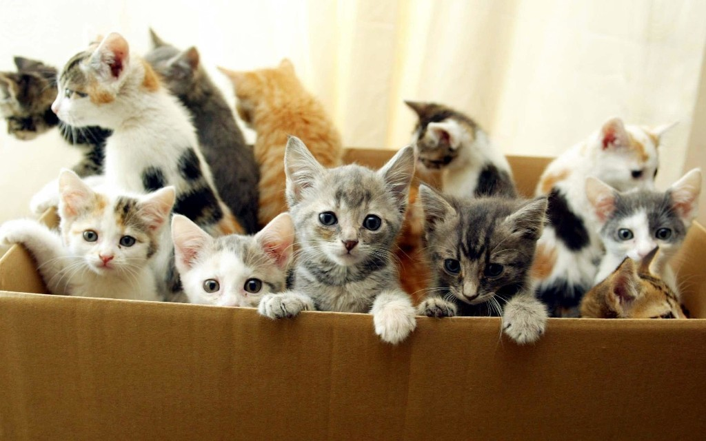 'Kitten crisis' - thousands could be left homeless as owners can't neuter cats in lockdown