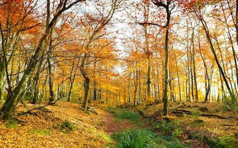 The forgotten English forest that changed the face of the British countryside