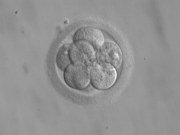 British scientists could genetically edit human embryos by March