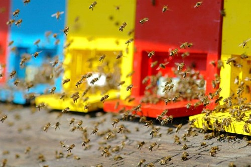 The surprising nation that loves bees more than anywhere else in the world