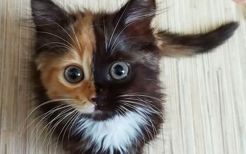 Meet the charming 'two-faced' cat taking the internet by storm