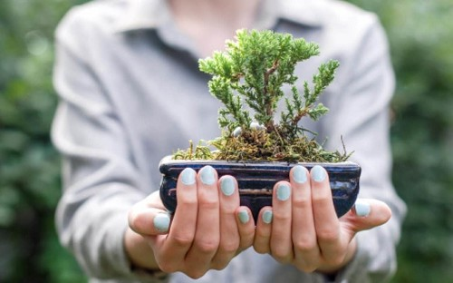 Meet the man behind British bonsai: 'I let the trees tell me what they want'