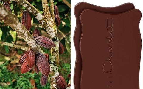 Real-life Willy Wonkas: how Hotel Chocolat turns bean into bar from a paradise HQ in St Lucia