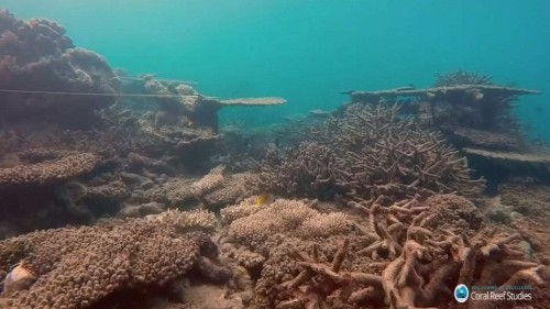 Scientists record biggest ever coral die-off on Australia's Great Barrier Reef