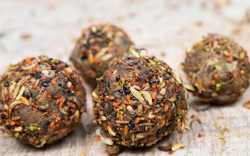 How to make seed bombs to brighten up your patch