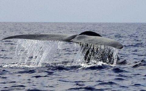 Britain can be proud of its vital role in bringing back the blue whale