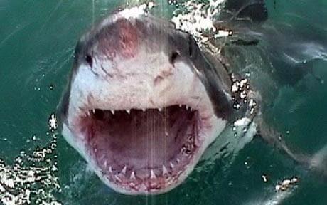 World's 10 worst shark attacks