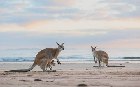 Ten of the best experiences to enjoy in Queensland