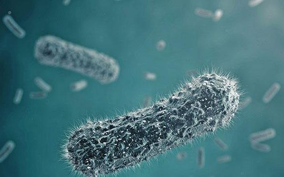 US woman killed by superbug resistant to every available antibiotic