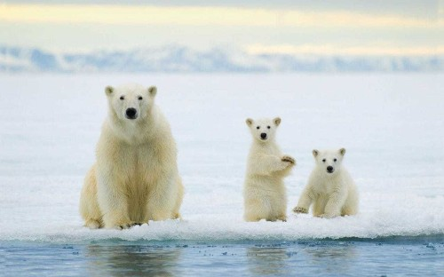 Another Arctic ice panic over as world temperatures plummet