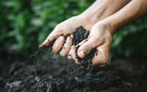 World Soil Day 2019: the A-Z of soil, the 'battery pack powering all life'
