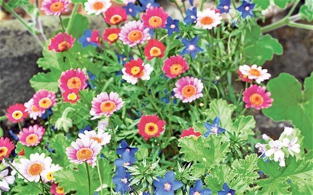 How to get summer colours in an autumn garden