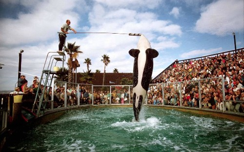 Exclusive: Virgin to stop selling tickets to SeaWorld