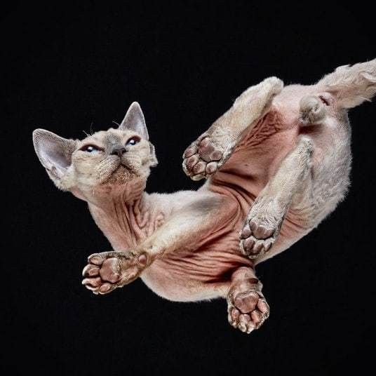 Under-Cats: cats photographed from underneath, by Andrius Burba - Telegraph