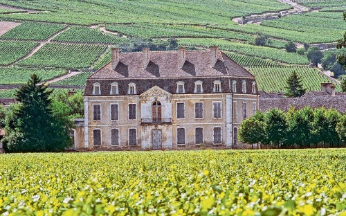 Burgundy: the wine that makes grown men cry