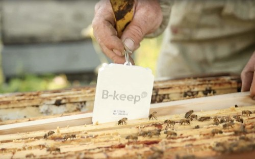 Honeybees look to healthy future with hi-tech helping hand from space