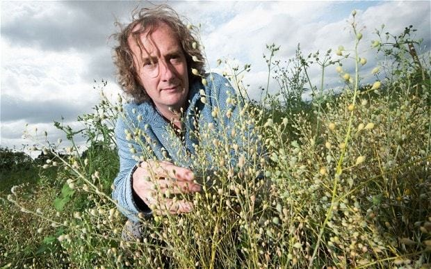 GM crops: what it will mean for you if British farmers get green light