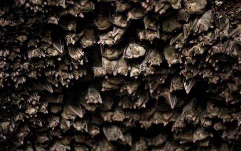 Bat poo no longer blights church and interrupts service, as worshippers rejoice over new scheme