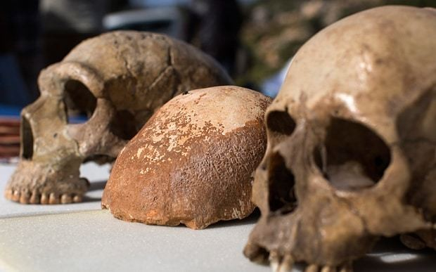 Paleo diet should include carbohydrates to be authentic, say scientists