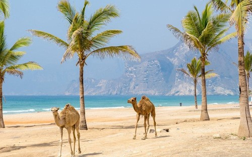 Oman: opulence with tradition in the Arabian Peninsula