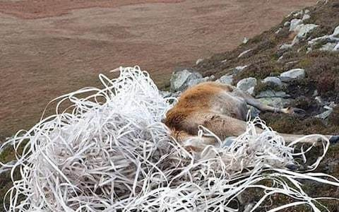 Stag dies in Scottish Hebrides after getting tangled in washed up plastic fishing lines