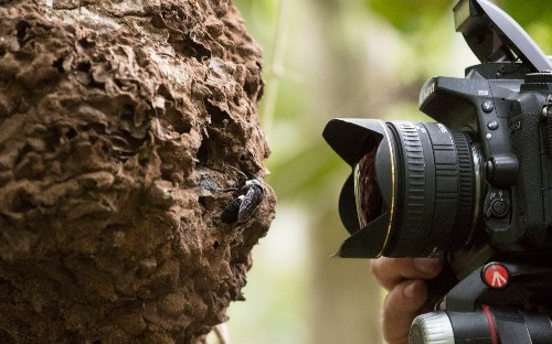 World's largest bee found in Indonesian rainforest in 'holy grail' discovery