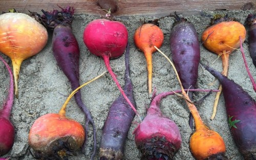 The best beetroot to grow to eat