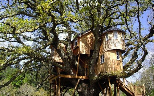 Glamping holidays: Devon's house in the treetops