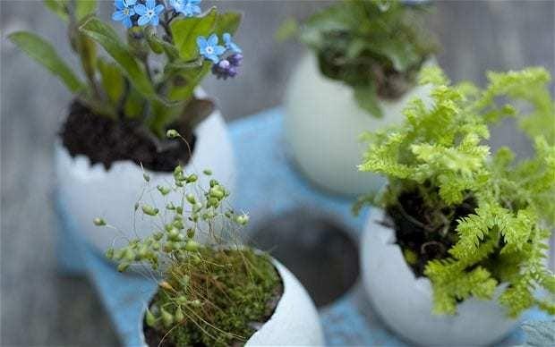 How to make teeny tiny container gardens