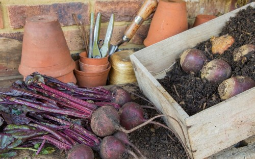 Grow to eat: how to store your fruit and veg over winter