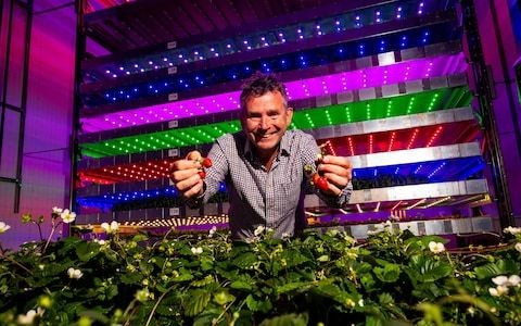 The only way is up: will vertical farms tackle the world's growing food crisis?