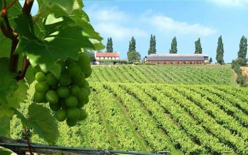 The best English vineyard breaks