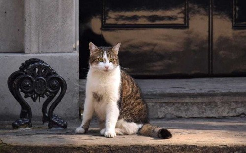 Fur flies in the House of Lords as peer asks: 'Who pays for Larry the Cat?'