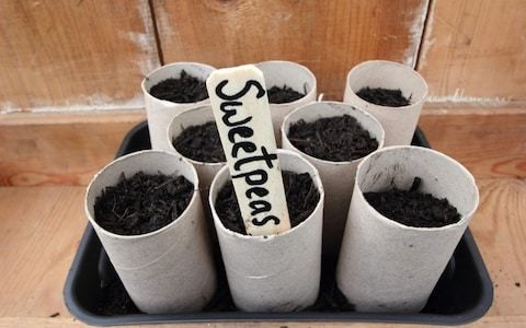 Grow to eat: how to cut back on plastic pots