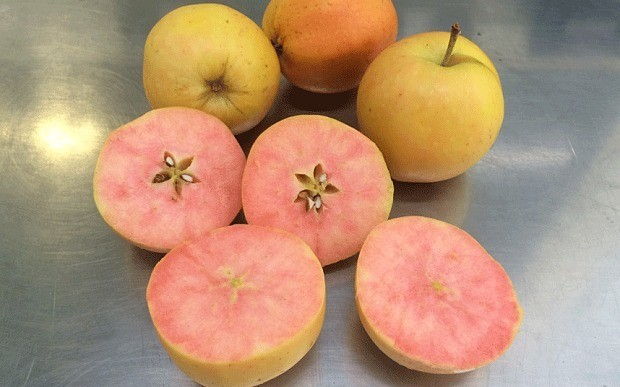 Surprize! Tesco unveils quirky new pink-fleshed apple