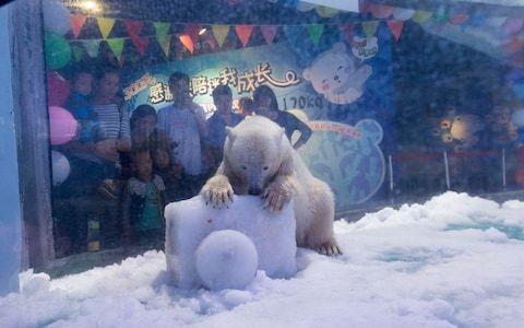 'World's saddest polar bear' kept in shopping centre finally sees some sunlight
